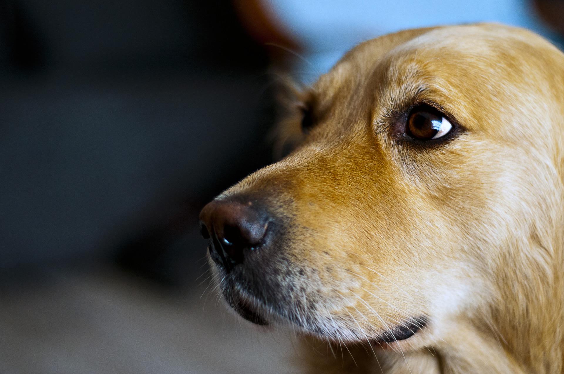 3 Tipps beim Kauf eines Dogscooters