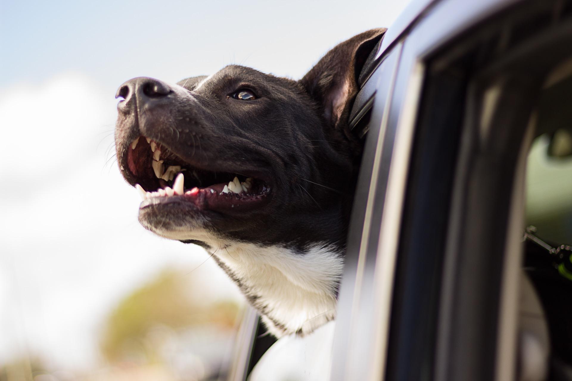 9 Interessante Tipps über Einer Hundebox Touran