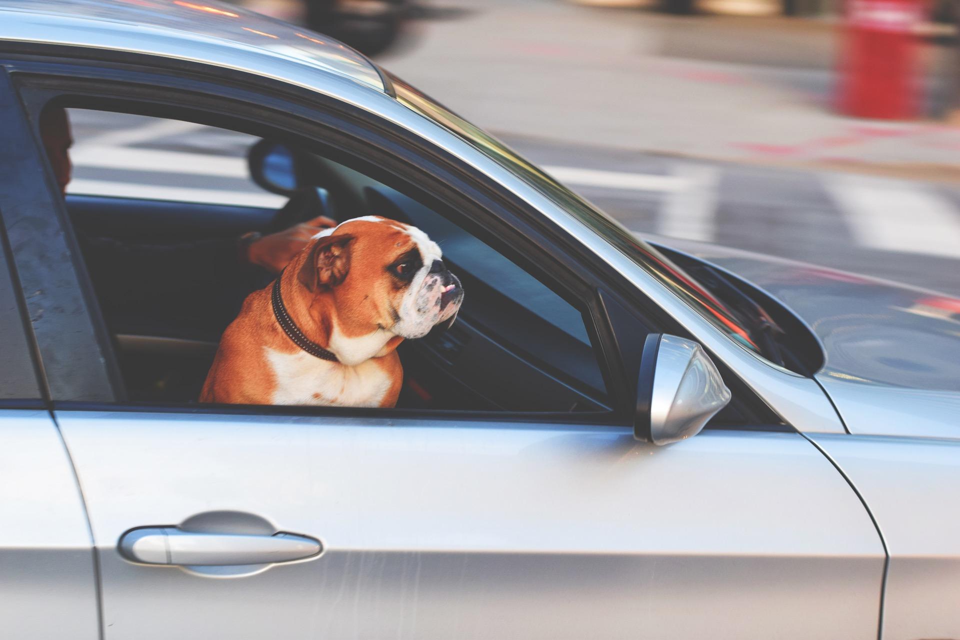 6 Atemberaubende Dinge über Einer Hundebox Heyermann