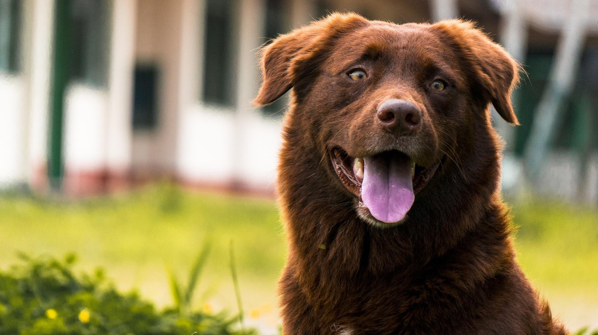3 Dinge, die der moderne Hund von heute braucht