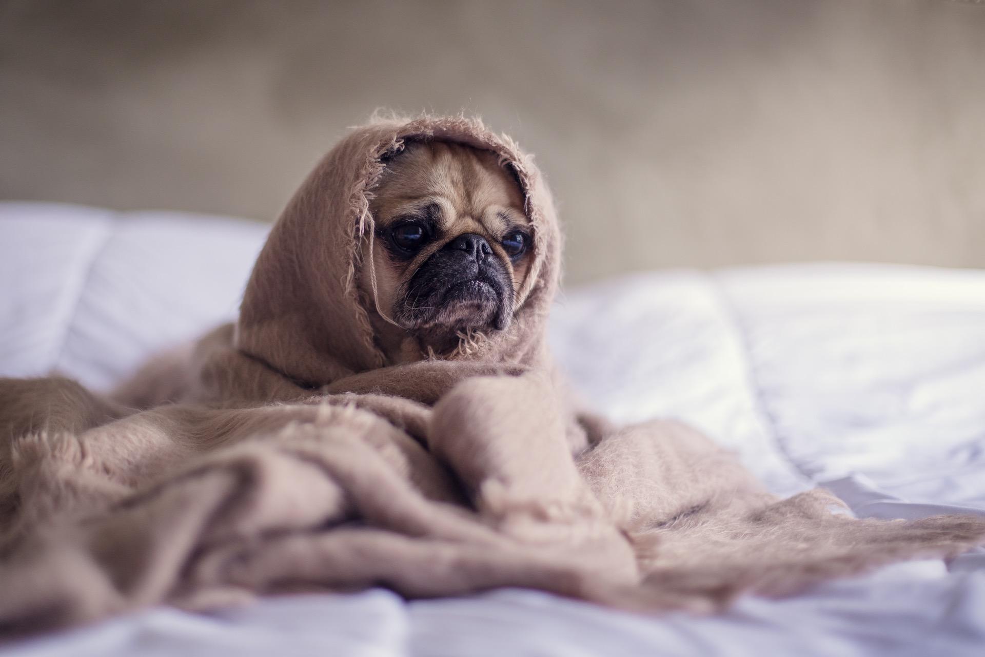 7 Erstaunliche Fakten Zum Thema Einer Hundebox Klappbar