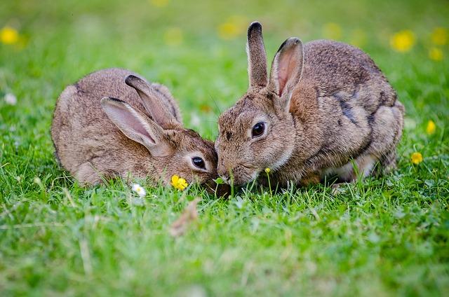 Die besten Namen für Kaninchen